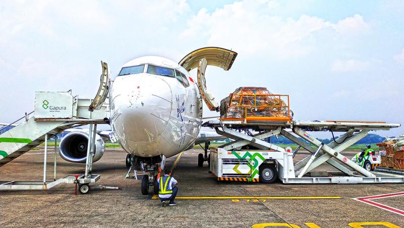 Jakarta-Timika Dua Kali Sepekan, Layanan Terbaru CKB Logistics