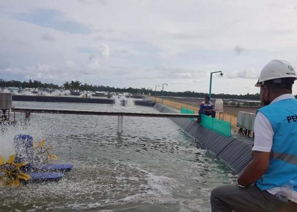 Dukung Produktivitas, PLN Siap Pasok Listrik 65 MVA ke Kawasan Tambak Udang di Sulteng