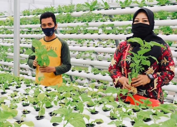 Masyarakat Kuala Tanjung Panen Sayuran Hidroponik Hasil Bantuan INALUM