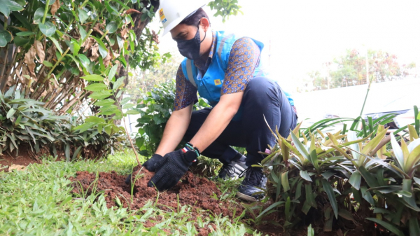 Peduli Lingkungan, PLN Lakukan Aksi Tanaman Bibit Pohon dan Bersih Gardu Serentak di Jakarta Raya