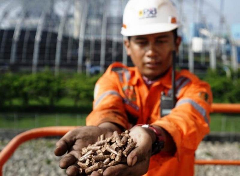 Pembangkit Gencar Gunakan Pelet Biomassa, ESDM: Belum Ada Produsen Secara Komersial