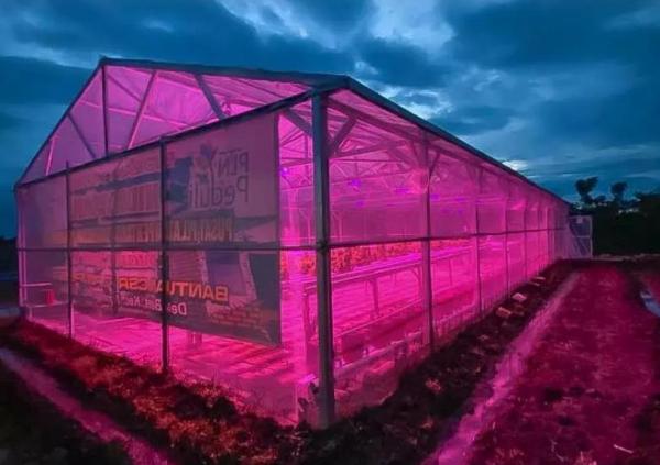 PLN Kembangkan Lampu UV untuk Sektor Pertanian