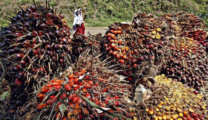 Produksi Berlebih, Pengusaha Sawit Mengandalkan Program Biodiesel